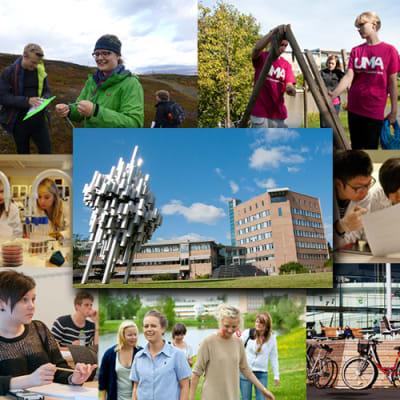 Lärarhögskolan, Umeå Universitet