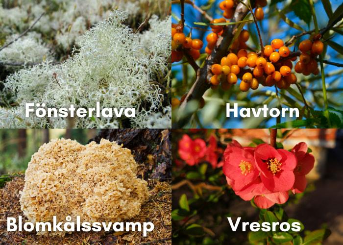 Ätbara växter
