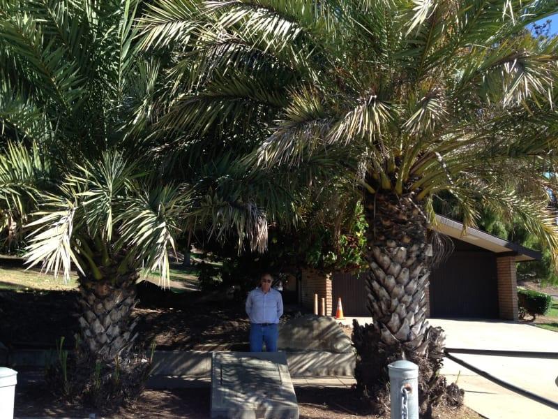 CHL #67 Serra Palm Site