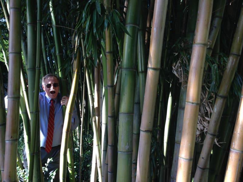 NO. 856 RALSTON HALL, Bamboo Garden
