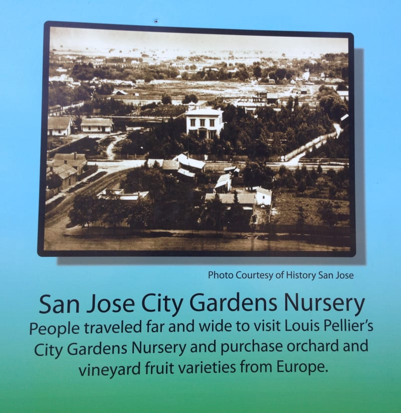 San Jose city Gardens Nursery