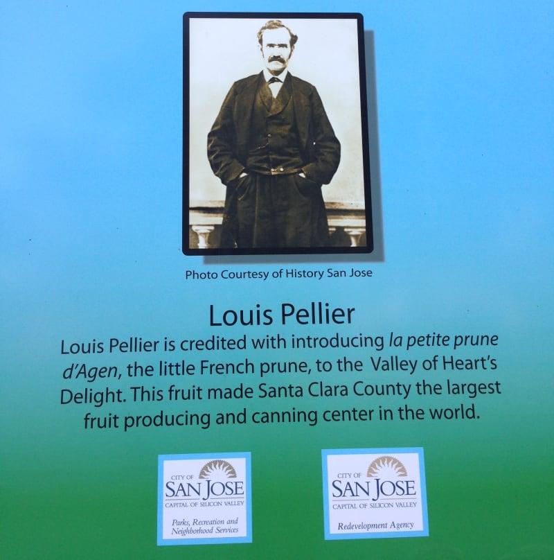 Louis Pellier