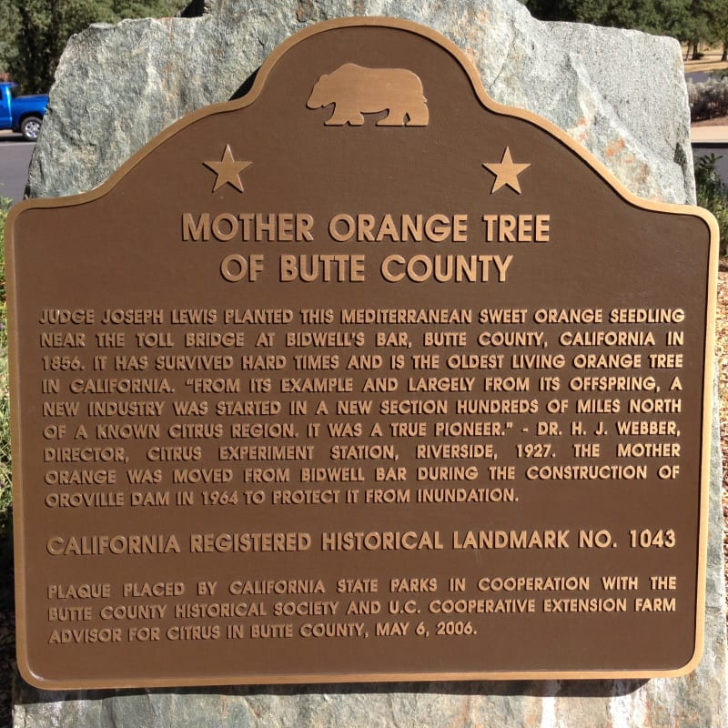 NO. 1043 Mother Orange Tree of Butte County - State Plaque