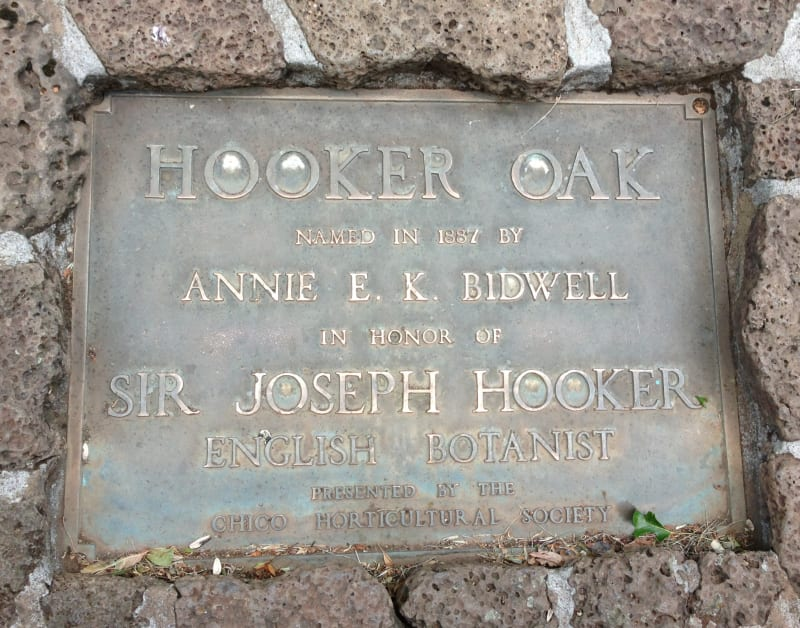 NO. 313 HOOKER OAK - Plaque at base of the tree