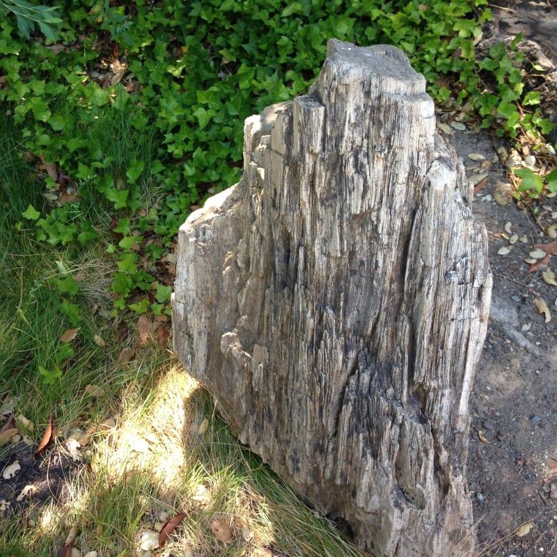 NO. 915 PETRIFIED FOREST - Petrified Stump