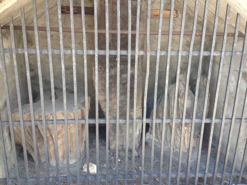 NO. 406 BIG OAK FLAT - Pieces of the Old Big Oak