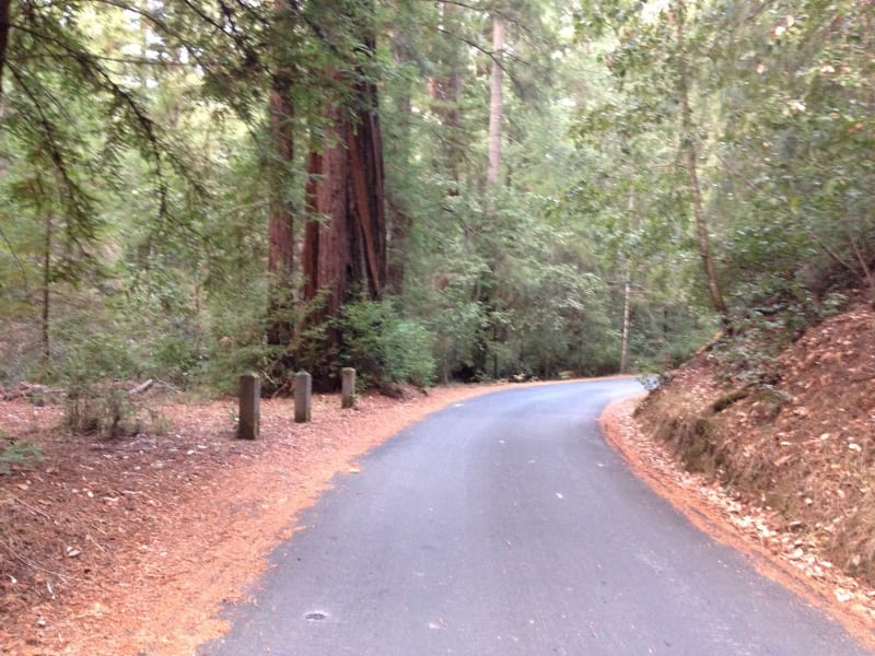 NO. 827 BIG BASIN REDWOODS STATE PARK - Sky Meadow Rd to Slippery Rock