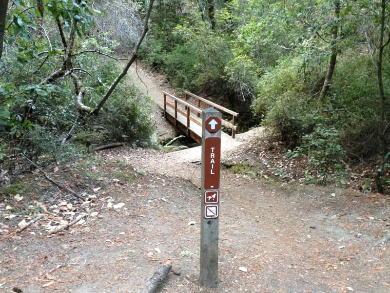 NO. 827 BIG BASIN REDWOODS STATE PARK - Trail on the North east of parking.