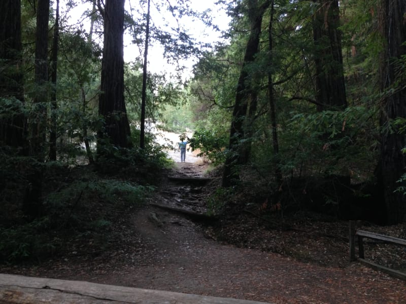 NO. 827 BIG BASIN REDWOODS STATE PARK - Trail on the south west of parking