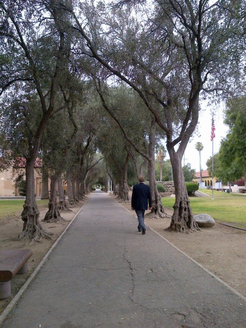 NO. 150 BRAND PARK (MEMORY GARDEN) - Walkway