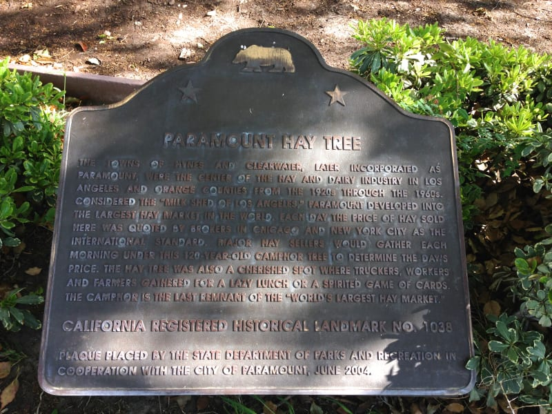 NO. 1038 Hay Tree - State Plaque
