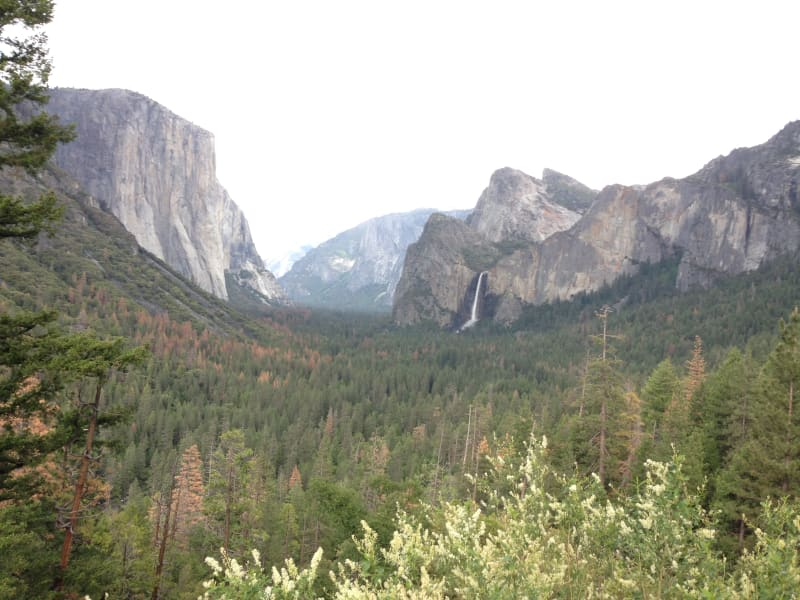 NO. 790 YOSEMITE VALLEY