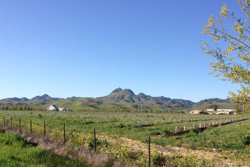 CHL No. 929 Thompson Seedless Grape Site Fields