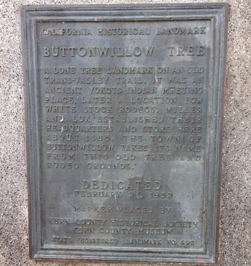 CHL No. 492  Buttonwillow Tree Private Plaque