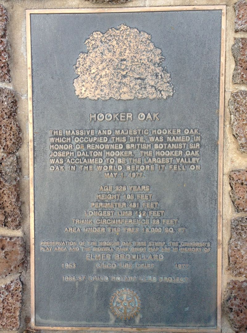 NO. 313 HOOKER OAK - Private Plaque