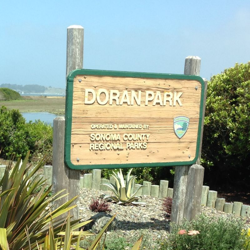 NO. 833 BODEGA BAY AND HARBOR - Doran Park
