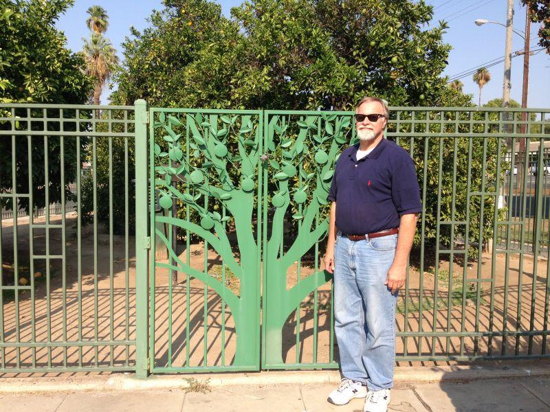 NO. 20 PARENT WASHINGTON NAVEL ORANGE TREE - Gate