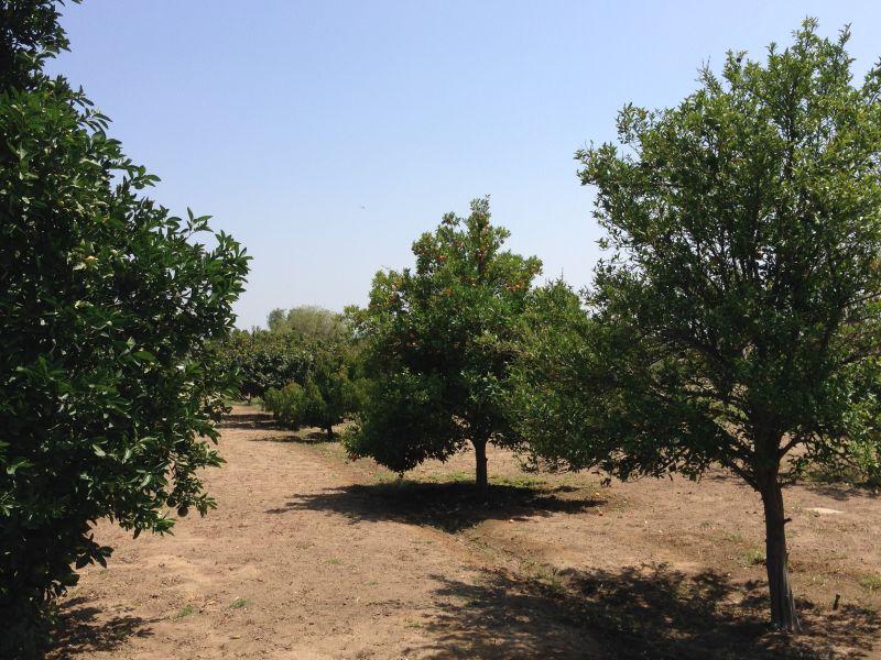 NO. 943 JENSON RANCH - Orchard