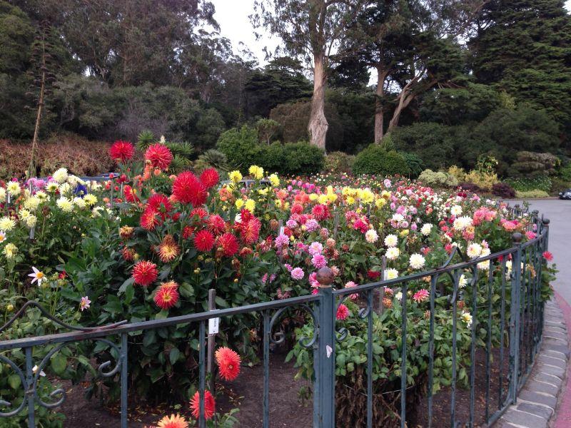 NO. 841 THE CONSERVATORY – Zinnia Garden