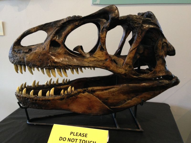 NO. 996 UNION OIL COMPANY BUILDING - Allosaurus Skull