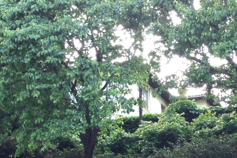 NO. 961 HAROLD LLOYD ESTATE (GREENACRES) - Estate at top of driveway