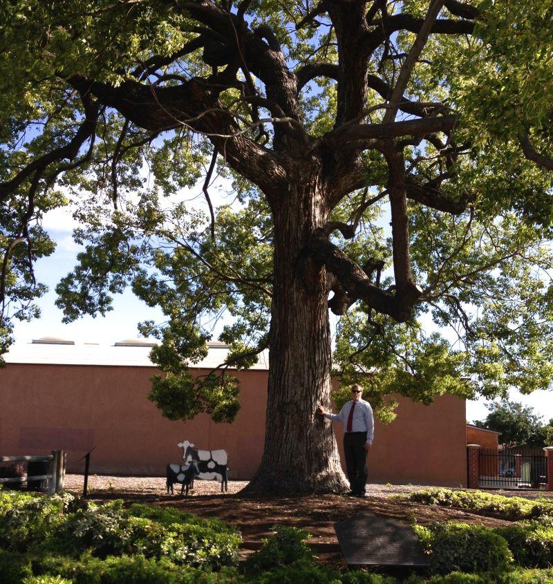 NO. 1038 Hay Tree