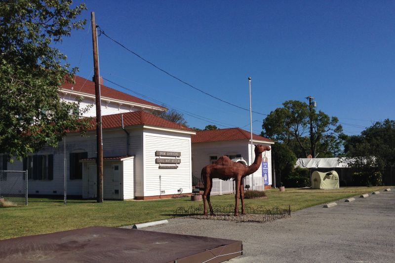 "CHL #169 DRUM BARRACKS - A nod the the ""Camel Experiment"""