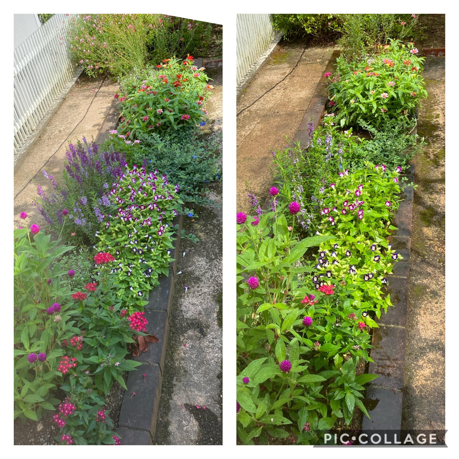 ガーデンメンテナンス