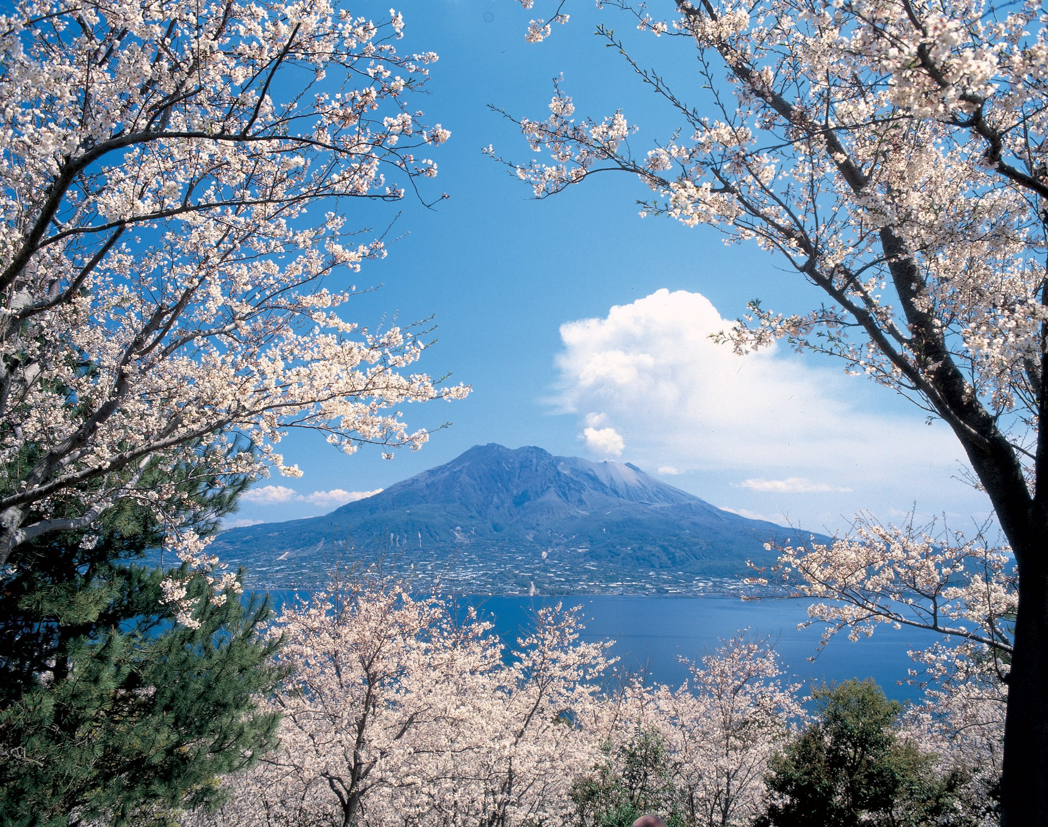 ©Kagoshima city.jpg