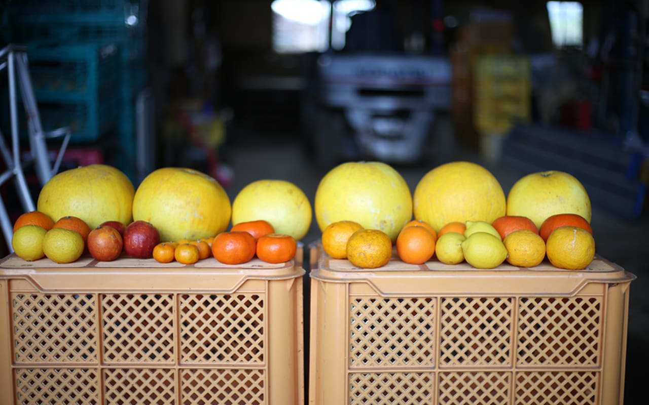 Cultivating the world's largest citrus fruit