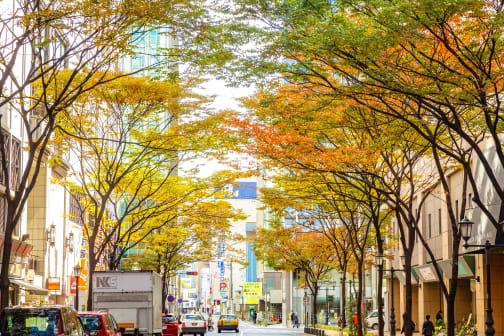 Fukuoka: A Food Sanctuary