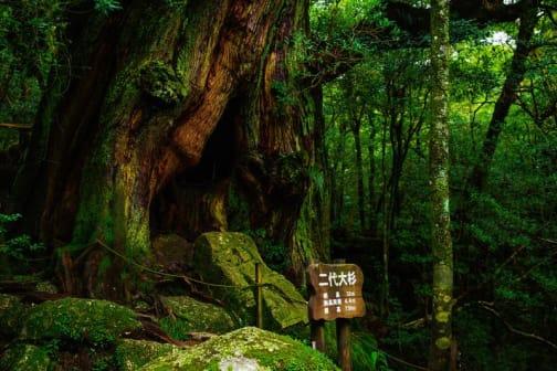 Yakushima: Island of Divinity