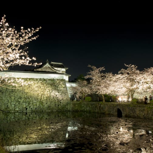 Maizuru park/Fukuoka Castle ruins