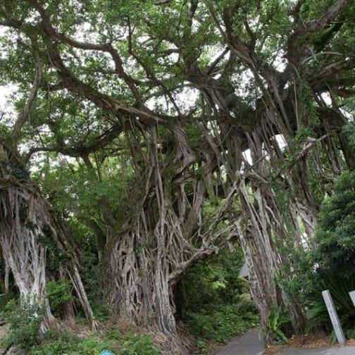 Yakushima: Feeling the Island