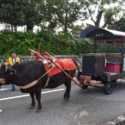 Ox Cart Experience at Izumi-Fumoto