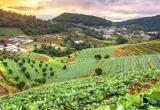 Organic Farmer Thumbnail