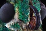 Entomologist Thumbnail
