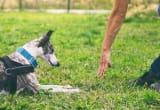 Dog Trainer Thumbnail