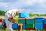 Beekeeper Thumbnail
