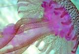 Marine Biologist Thumbnail