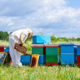 image for Beekeeper