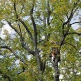 image for Arborist