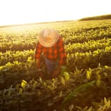 image for Agricultural Worker