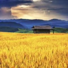Grain & Forage Crop Farmer Thumbnail