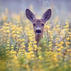 Wildlife Enforcement Officer Thumbnail