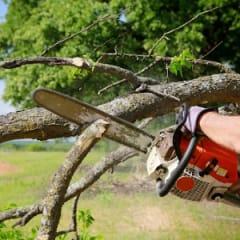 Tree Service Technician Thumbnail