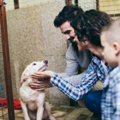 Pet Adoption Counselor Thumbnail