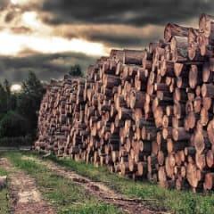 Logging Worker Thumbnail