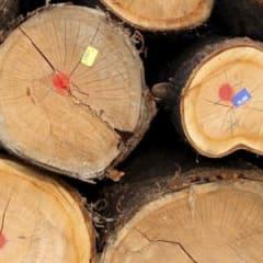 Log Grader