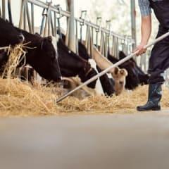 Dairy Herdsperson